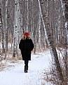 Picture Title - A Walk In The Bush