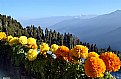 Picture Title - Lava..Darjeeling.
