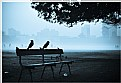Picture Title - greet a new morning
