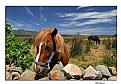 Picture Title - Wildlife in Sardinia
