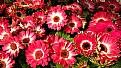 Picture Title - Flores de Lagos