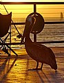Picture Title - Pelican on the pier