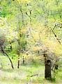 Picture Title - Manzanita Spring