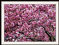 Picture Title - pink explosion