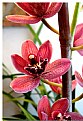 Picture Title - orchid