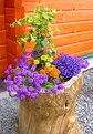 Picture Title - Flower pot