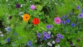 Picture Title - flower garden