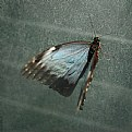 Picture Title - A butterfly within