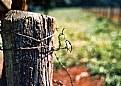Picture Title - farm