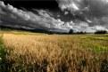 Picture Title - Grain-field