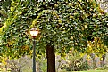 Picture Title - Tree & Lamp Post