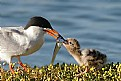 Picture Title - Feeding The Baby