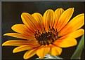 Picture Title - Last Flower