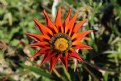 """Picture Title - """"Wild Flower"""""""