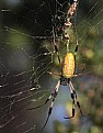 Picture Title - On the Web