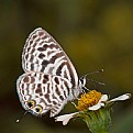 Picture Title - Feeding butterfly