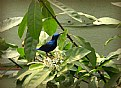 Picture Title - Birdy
