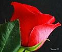 Picture Title - Happy Valentine's Day