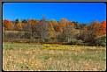 Picture Title - Pumpkin Field