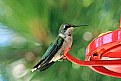 Picture Title - Hummingbird