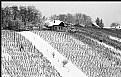 Picture Title - vineyard in winter