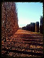Picture Title - Autumn in Venaria (16 Dicembre 2013)