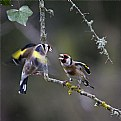 Picture Title - Birds of a feather