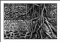 Picture Title - Tree & Wall