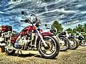 Picture Title - Bikers Grove