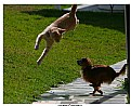 Picture Title - Flying Cat