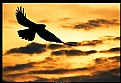 Picture Title - Orange Sunset