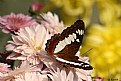 Picture Title - The Butterfly - 2