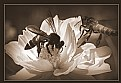 Picture Title - honey bee7