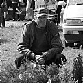 Picture Title - evergreen seller