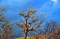 Without U I'm a barren tree ...