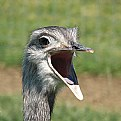 Picture Title - ostrich
