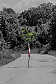 Picture Title - branch in road ahead