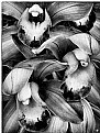 Picture Title - The Orchid Bunch