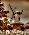 Picture Title - WindMill At GGP