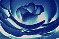 Picture Title - Blue roza