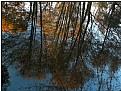 watertrees' landscape