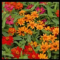 """Picture Title - """"Flowerbed"""""""
