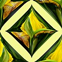 Picture Title - Signature Artwork Of A Yellow Iris