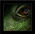 Picture Title - Lizard eye