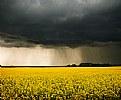 Picture Title - canola storm
