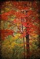 Picture Title - Autumn Resplendent