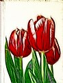 Picture Title - Sketched Tulips
