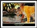 Picture Title - Tiger Fractal
