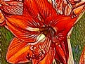 Picture Title - Bold Red Amaryllis