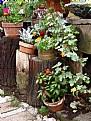 Picture Title - Pots on Stumps